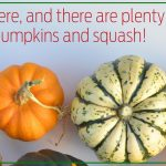 Fall is here, and there are plenty of ways to use pumpkins and squash!