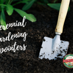 3 perennial gardening pointers