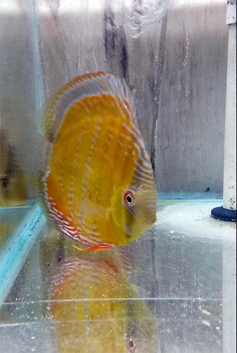 Redland-Market-Village-Roberts-Pet-Shop-Fish