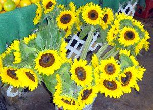 Redland-Market-Village-Sun-Flowers