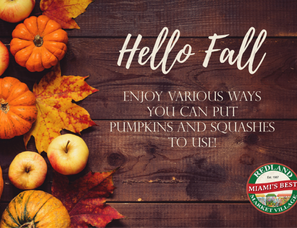 Say hello to Fall: Enjoy various ways you can put pumpkins and squashes to use!