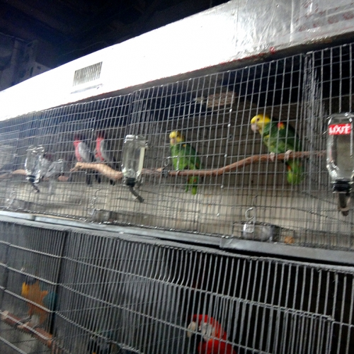Redland-Market-Village-Pet-Shop-Birds