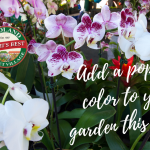 Add a pop of color to your garden