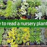 How to read a nursery plant tag