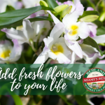 Add Fresh Flowers to Your Life